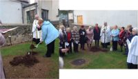 Tree Planting in Holy Trinity, Ballycastle 2019